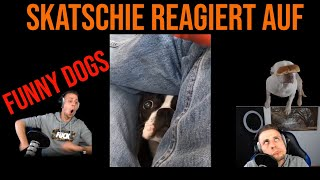 SKATSCHIE reagiert auf FUNNY DOGS (Try not to laugh)