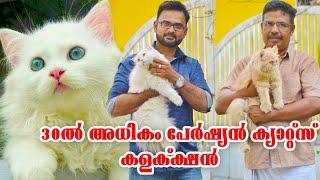 പേർഷ്യൻ ക്യാറ്റ് എന്ന ഒരു വിഭാഗം പൂച്ചകളോടൊപ്പം സുലൈമാൻ ഇക്ക|Persian cat|Oru adaar pets story