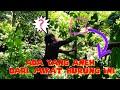 Serruuu Mikat Burung Di Hutan Liar Temu Burung Aneh Kali Ini Salam Kicau Mania  Mp3 - Mp4 Download