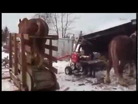 Pferd dient als Elektrizitätsquelle für Säge