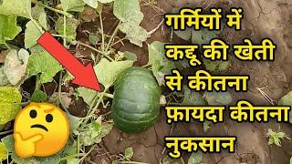 मिश्रित खेती - लहसुन के साथ कद्दू फ़ायदा या नुक्सान   Intercropping Farming - Benefit or Loss