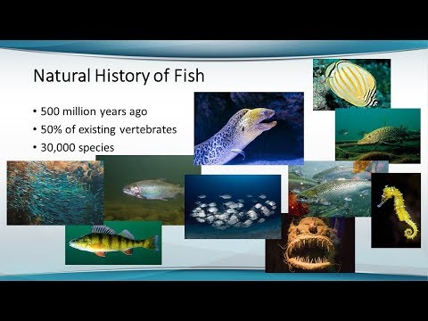 Aquaculture Animal Welfare