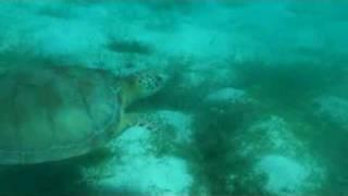 nager avec les tortues aux Grenadines