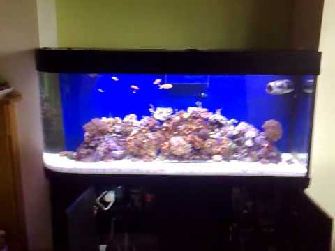 Fish Suggestions for 100 Gallon Tank - Tropical Fish ...