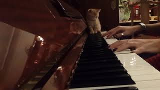 Steve Aoki x Lauren Jauregui - All Night (Piano Cover) ft. My Cat