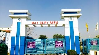 Dairy Farming (Cow & Buffalo) an Attractive Business in NCR & Other States of INDIA (Max Dairy Farm)