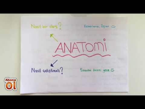 ANATOMİ- 1.KONU- Anatomiye Giriş