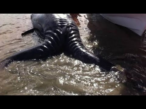 This Mysterious Sea Monster Washed Ashore, And Scientists Had Never Seen Anything Like It Before