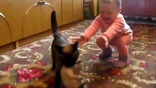 Кошка забрала котенка у ребёнка