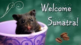 Welcome Sumatra!