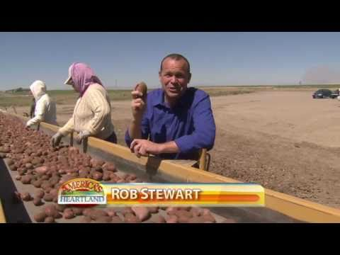 Idaho Potato Harvest