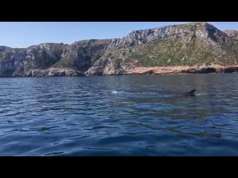 Navegant amb balenes a Dénia i Xàbia (I)
