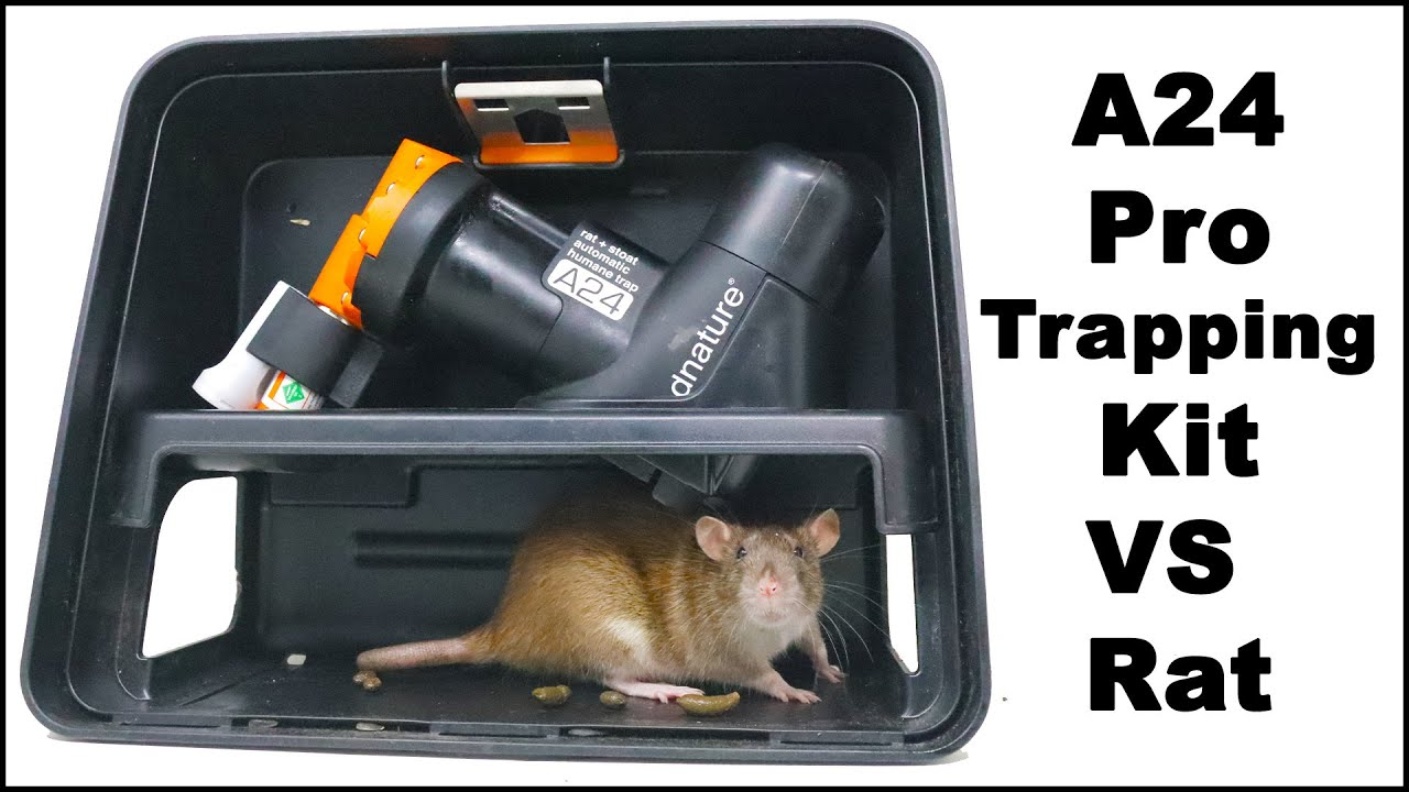A24 CO2 Pro Trapping Kit VS Rats In The Barn. Mousetrap Monday.
