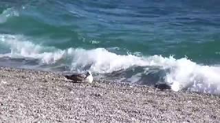 Море (Павел Воля) / Sea