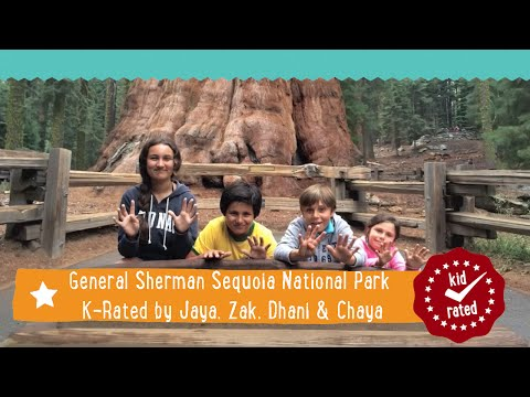 General Sherman Tree at Sequoia National Park K-Rated by Jaya, Zak, Dhani & Chaya