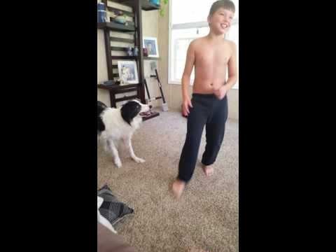 Dogs play with balloons