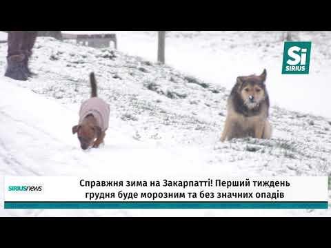 Справжня зима на Закарпатті!