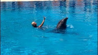 Dolphin Dancing With Girl | Sealanya Dolphin Show (2018)