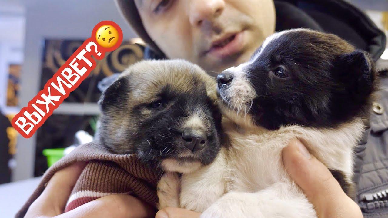 Спасаем жизнь щенку. Обморожение и глисты.
