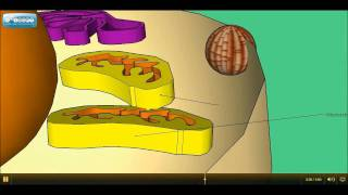 3d animated and guided tour of an animal cell