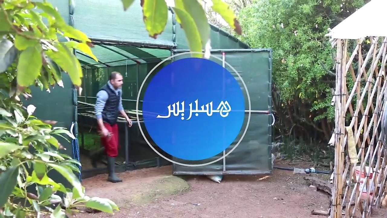 Elevage escargots au maroc (hespress) تربية الحلزون بالمغرب