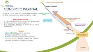 VIRTUAL GASTROENTEROLOGÍA PATOLOGÍA DE PARED ABDOMINAL