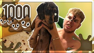 MY PUPPY POOPED 1000 TIMES ON MY BRO