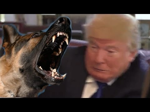 Even animals hate Donald Trump