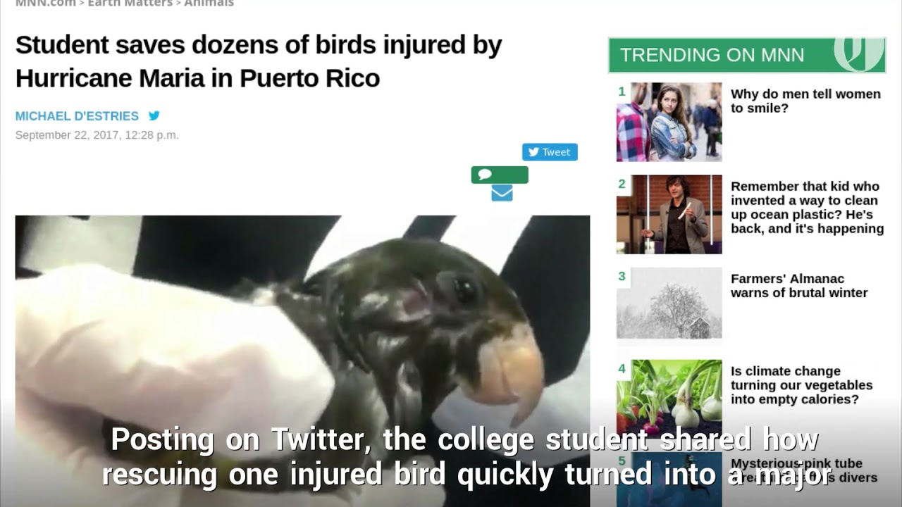 Student Saves Birds From Hurricane Maria