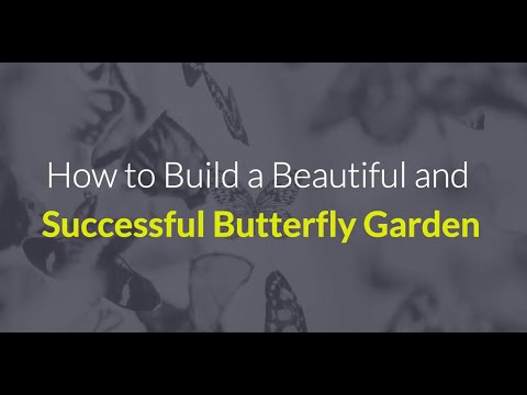 How To Setup A Butterfly Garden