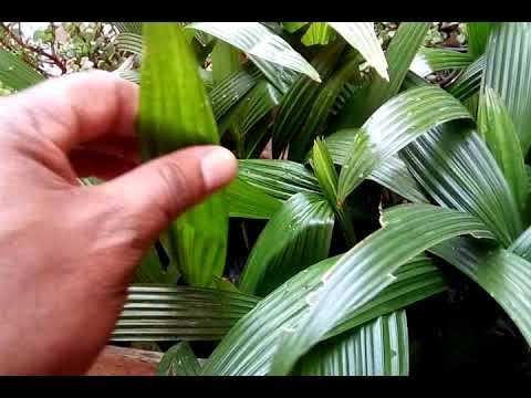 Conhe a as plantas ornamentais para vasos e jardim youtube for Plantas para veredas con flores