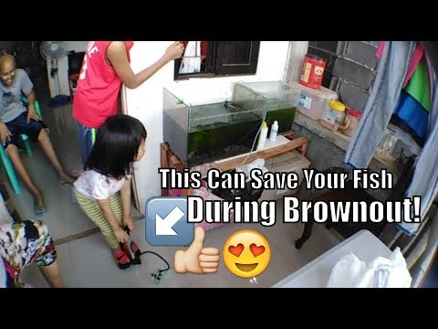 ultimate solution saving aquarium fish from dying during brownout