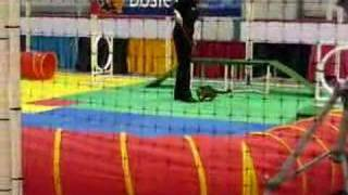 Cat Agility Course