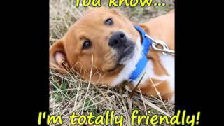 Rigby, Golden Retriever Rescue Resource, Grrr Inc.