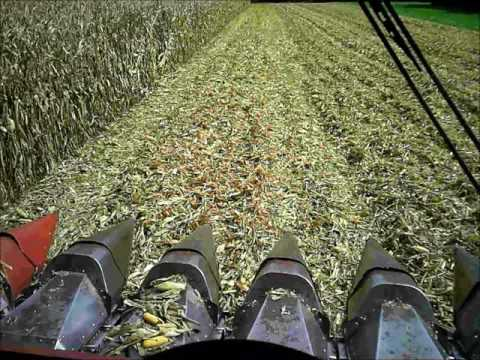 Case IH 2188 harvesting corn