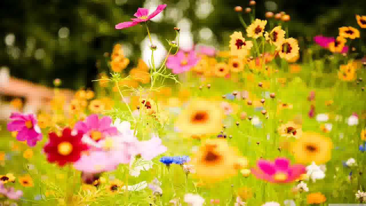 beautiful flowers hd  slideshow of pretty spring and summer, Natural flower