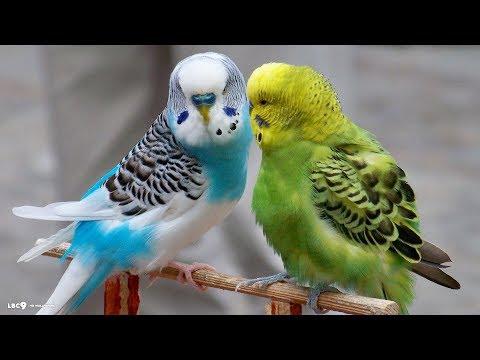 Love birds (cutest)