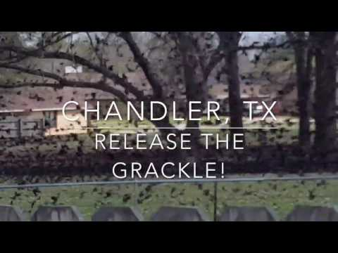 Release the Grackle in Chandler, TX!