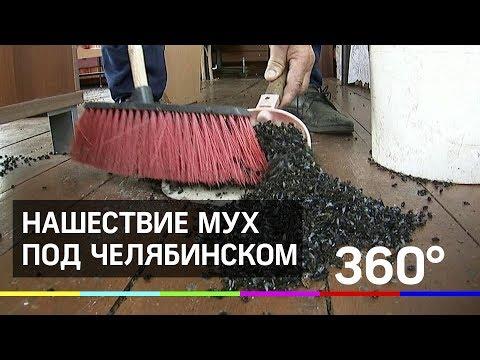Бесплатное мясо: нашествие мух под Челябинском
