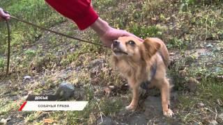 В Приморье примут закон о правилах содержания животных