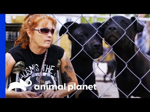 Behind The Scenes With Tia At Pit Stop For Change Rescue Center | Pit Bulls & Parolees