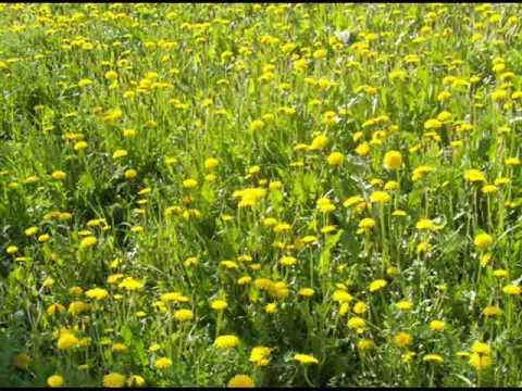 Что такое Травы луговые?