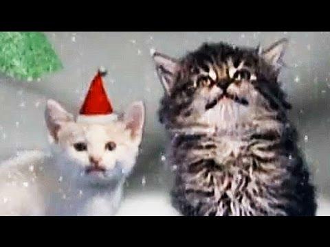 Cute Jingle Cats sing Silent Night