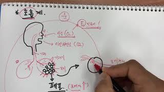 호흡계. 호흡의 원리. 중2과학