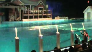 Dolphin Show Indianapolis Zoo