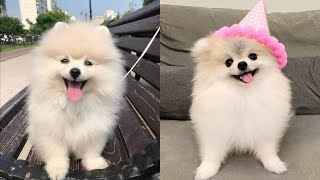 AWW Cute and Funny Baby Dogs videos Compilation cute moment of the animals 🐶🐶 2020 Funniest Animals😍