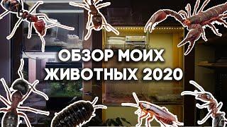 ОБЗОР МОЕЙ КОЛЛЕКЦИИ ЖИВОТНЫХ 2020! ВСЕ МУРАВЬИ И ДРУГИЕ ПИТОМЦЫ В ОДНОМ ВИДЕО \ Димон и пумба