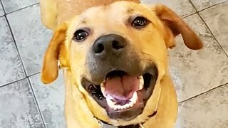 Cute and Funny Dog Videos to Watch While Staying Inside! 🐶