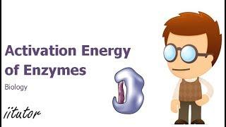 √ Activation Energy of Enzymes | Biology | iitutor