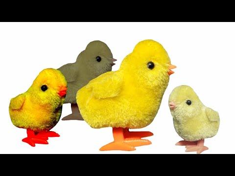 Ayam Ayaman, mainan bisa jalan sendiri